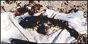 Seescorpion von Klaus Hebel 2
