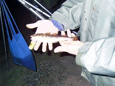 Minidorsch von Agalatze