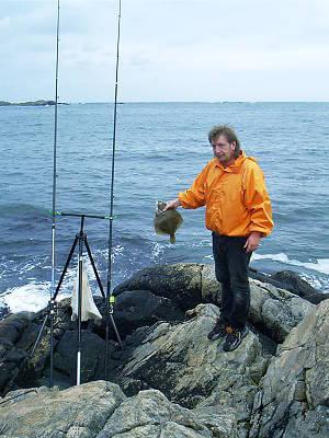 Schöne Plattfische beim Brandungsangeln von der Klippe in Südnorwegen