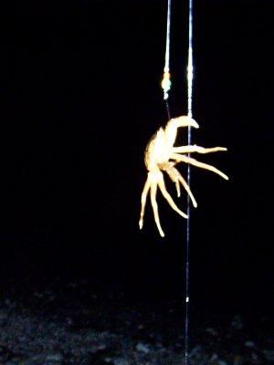 Krabbe am Angelhaken