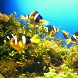 Barben, Fische, Korallen