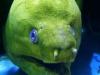aquarium_marco_3