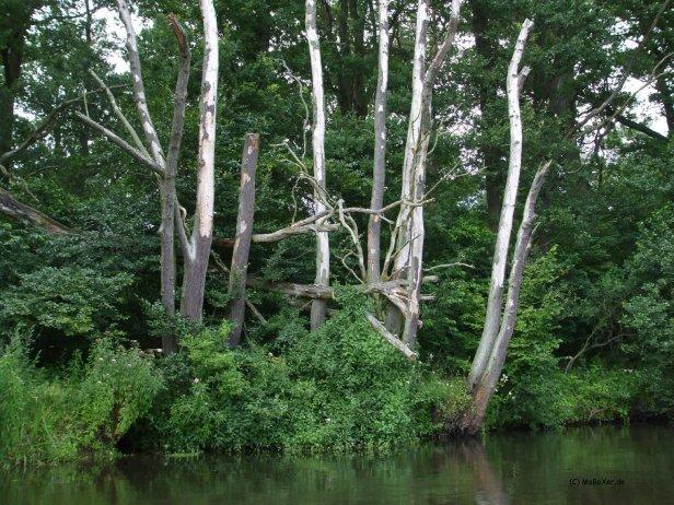 Bäume am Ufer © MaBoXer.de