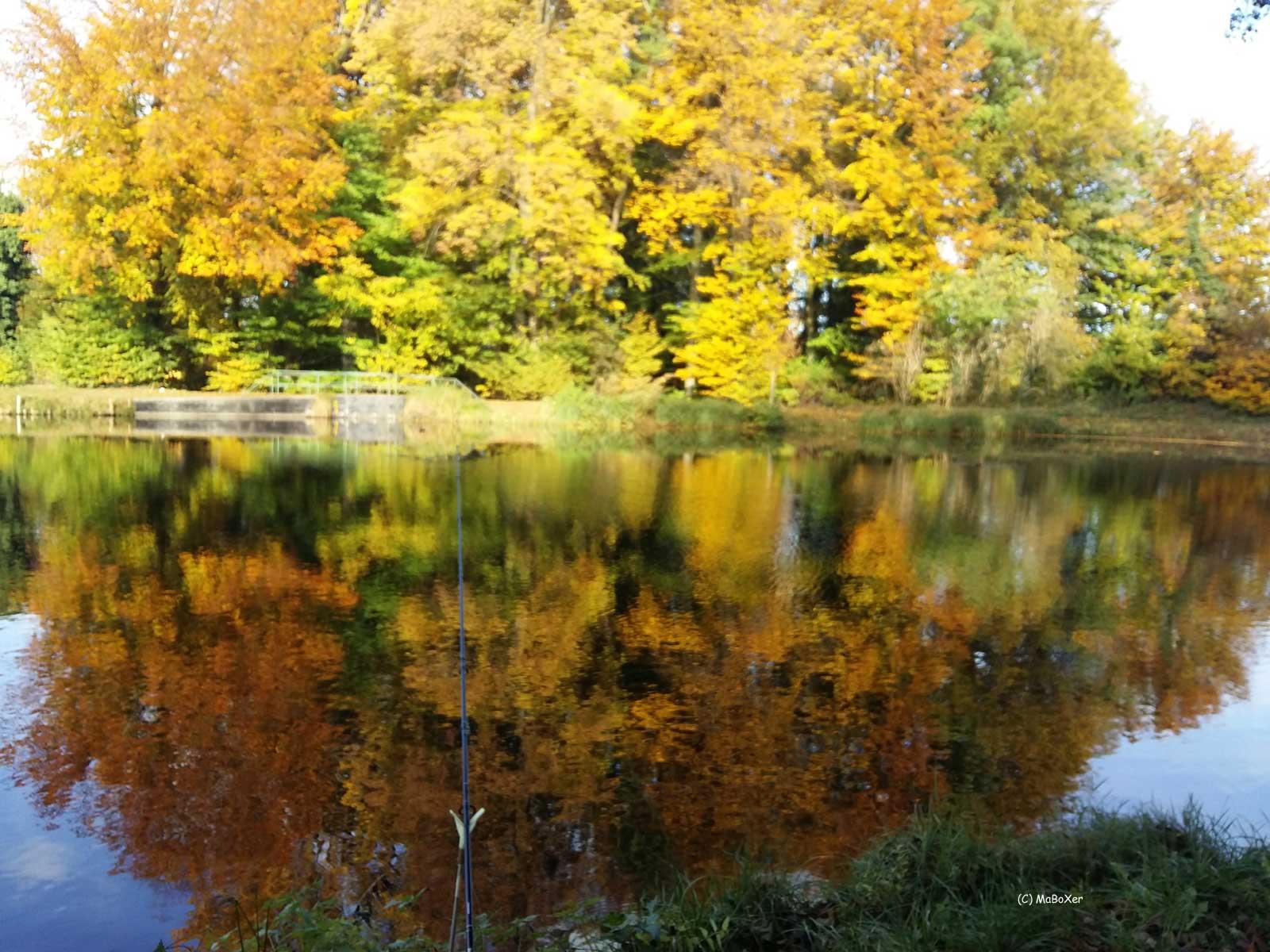 Teich 1 Herbstwald © MaBoXer
