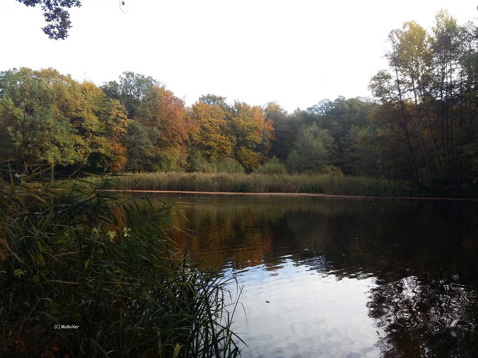 Teich 3 Platz © MaBoXer