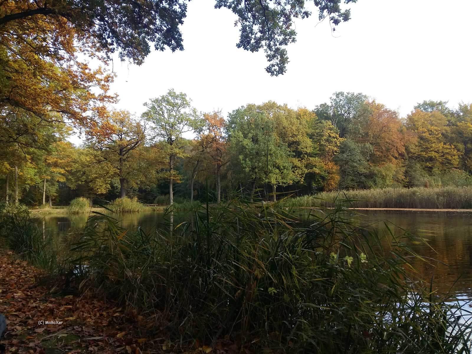Teich 3 Schilf © MaBoXer