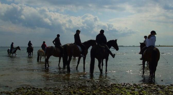 Reiten in der Ostsee - Foto (C) MaBoXer