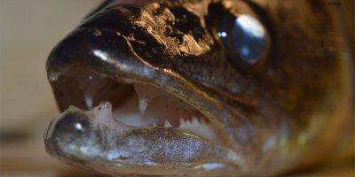 Beim Fisch kaufen höre auf dein Gewissen