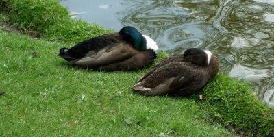 Tierechtsorganisation PeTA fordert Angelverbot in Binnen und Aussenalster