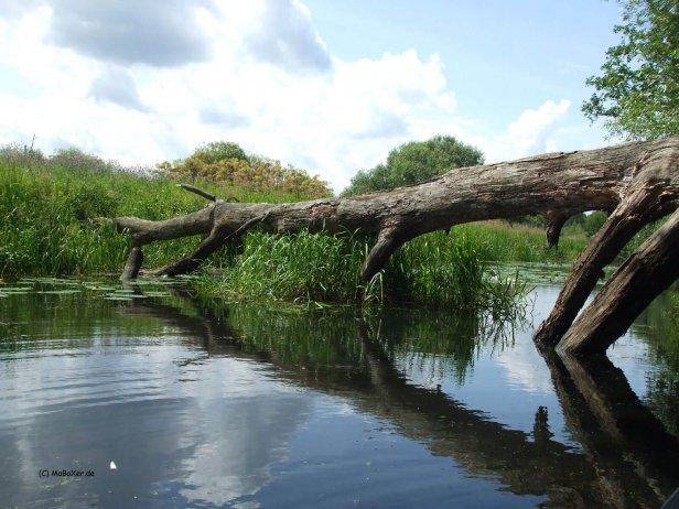 umgestürzte Bäume im Wasser © MaBoXer.de